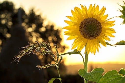 Comment entretenir votre jardin cet été