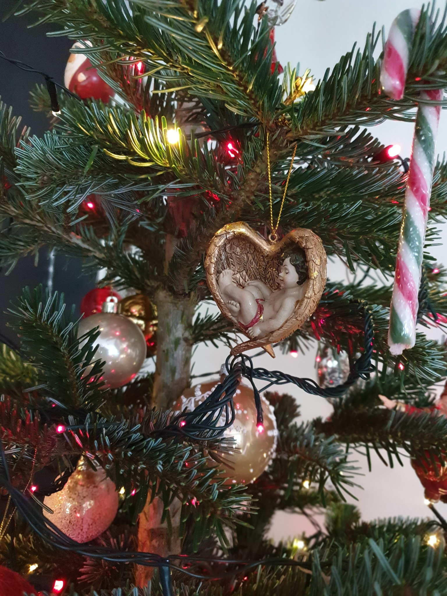Rencontre avec le sapin de Noël