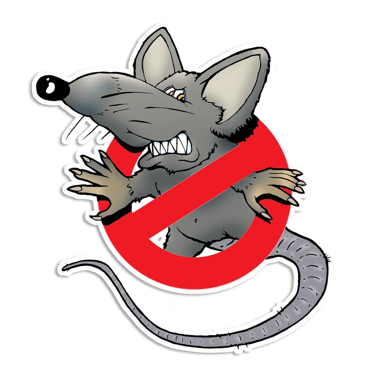 L'hygiène le meilleur ennemi des rats
